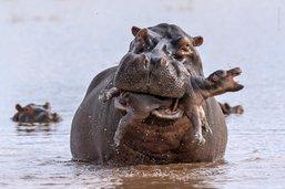 Ce qui fait la photographie animalière