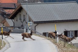 La route tue toujours plus d'animaux