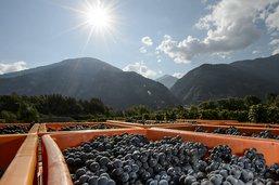 Provins ne pourra pas limiter ses achats de raisins