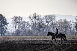 Fièvre de cheval aux paddocks