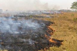 Le Pantanal brésilien, un paradis vert dans l'enfer des flammes