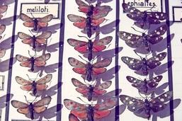 Cap sur les papillons de nuit