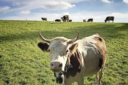 La politique agricole en pause