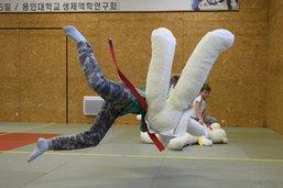 Des judokas face à des peluches