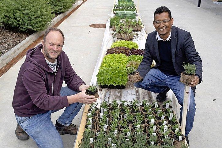 Un pot biodégradable en fibres végétales pour les plantons
