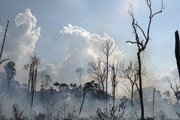 Record d'assassinats de défenseurs de la nature en 2020 (ONG)