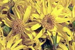 Histoire des plantes médicinales